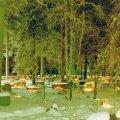 Jouluaatto, Pelkosenniemen hautausmaa